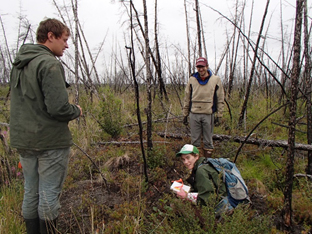 Sampling soils in a recently burned stand in the Siberian Arctic (Nikita Zimov, Ludda Ludwig (Woods Hole Research Center), and Michael Loranty).