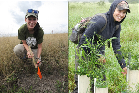 Graduate student alumni, Krysten Dick (left) and Jennifer Vela (right), measure thornscrub seedling growth and survival at Laguna Atascosa National Wildlife Refuge, TX.