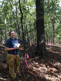 Graduate student Jennifer McDaniel installs leaf litter collection nets for a forest fuels study to begin this winter.